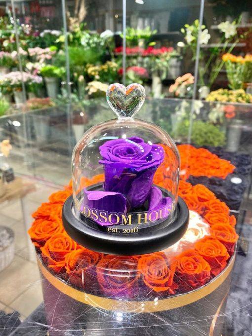 Enchanted rose Endast blomma lila
