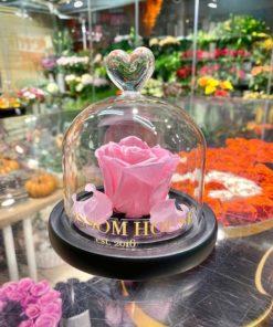 Enchanted rose endast rosa blomma