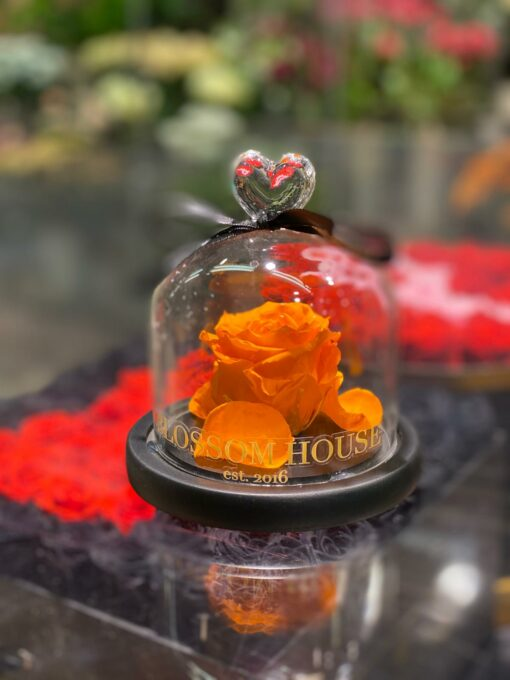 orange ros i kupa